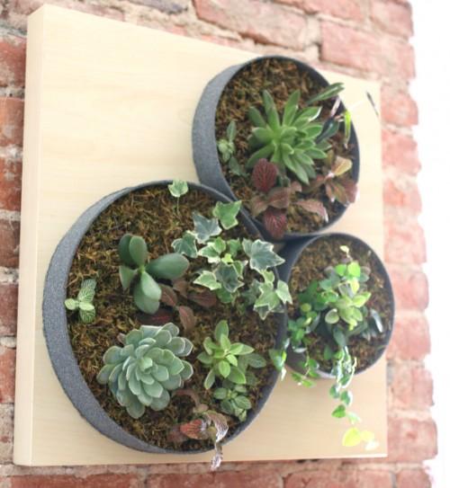 creative-diy-vertical-succulent-garden-1-500x543