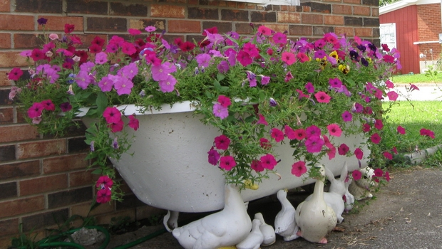 upcycled-garden-art-cast-iron-bathtub-pink-purple-petunias.jpg
